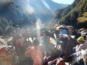 Emboutaillage de gens et de vaches